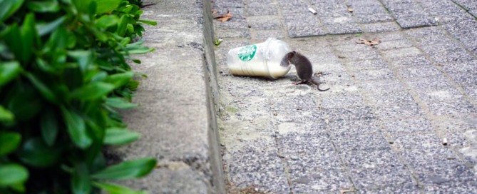 photo-rats-starbucks